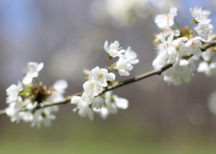 Blossoms. North Point State Par - vujadav17 | ello