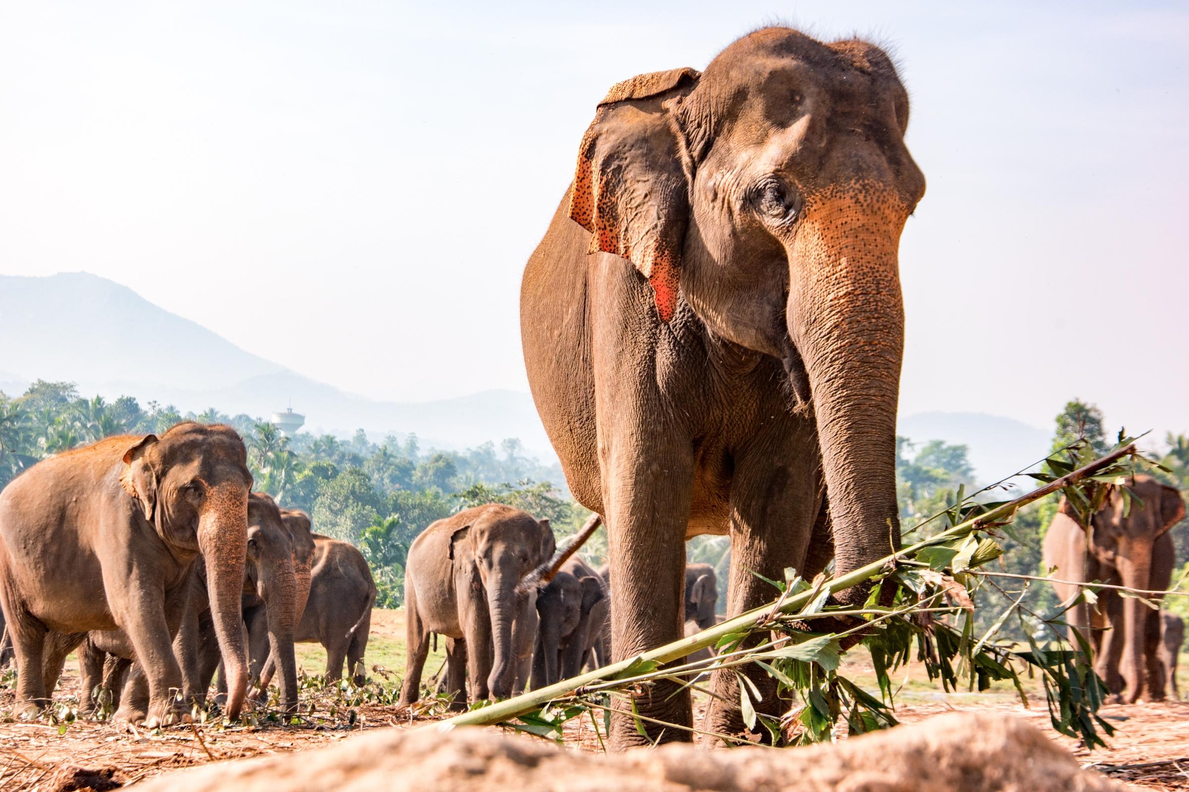 scenes forgotten sri lankan cou - wasimofnazareth | ello