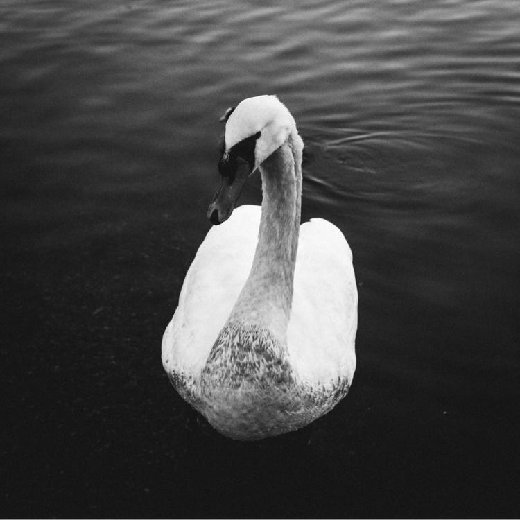Beauty Darkness - photography, snapshot - domreess | ello