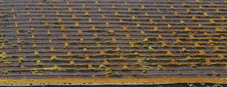 Pacific Northwest, roof moss ga - dave63 | ello