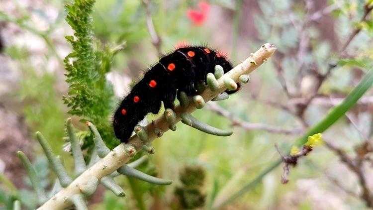 macro, nature, ButterflyСaterpillar - megacrash | ello