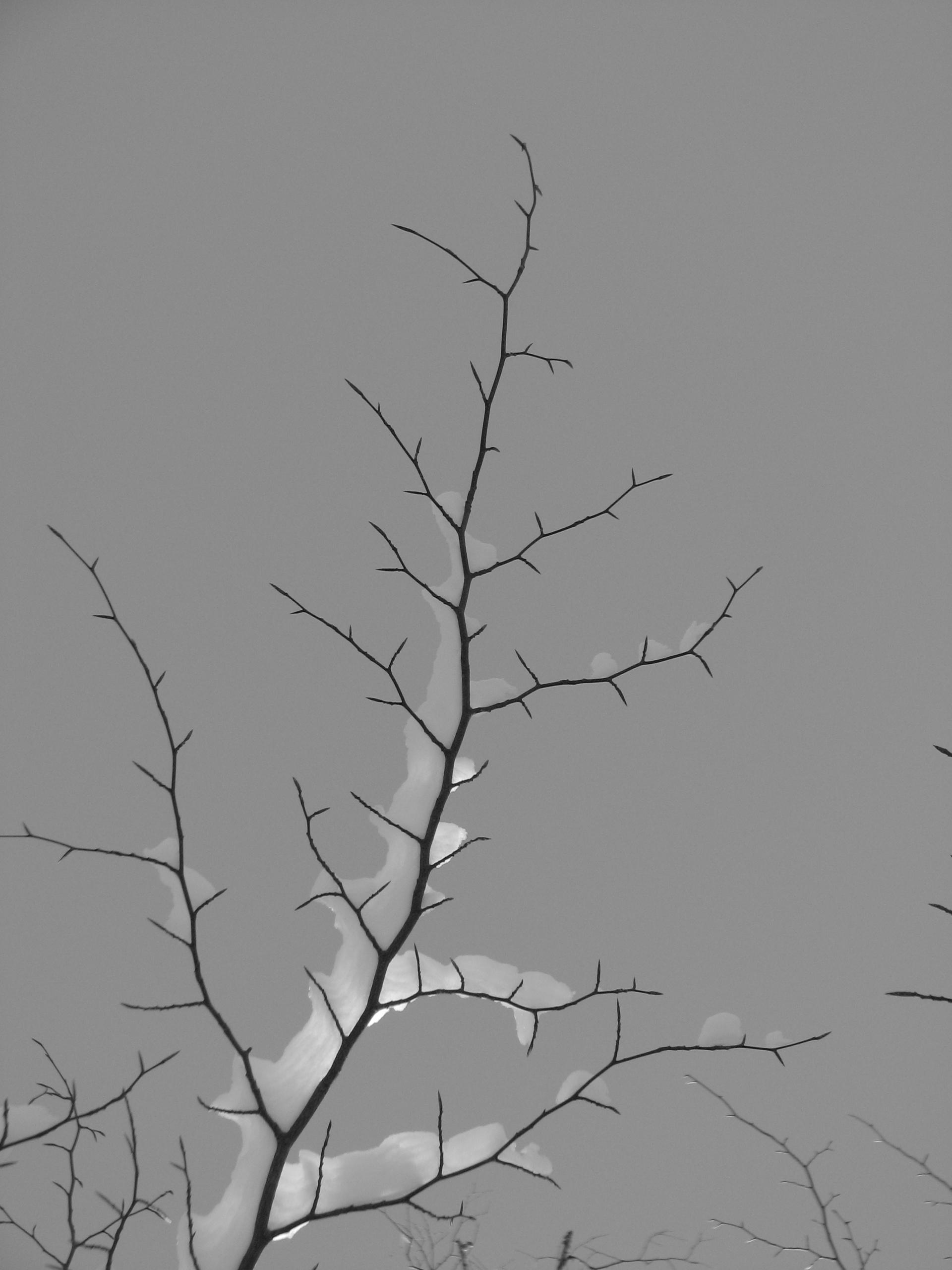 Light Rolf Olson minimalist - blackandwhite - thepoetsdoor | ello