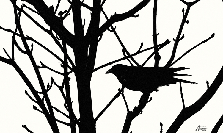 Black bird fly - artmen | ello