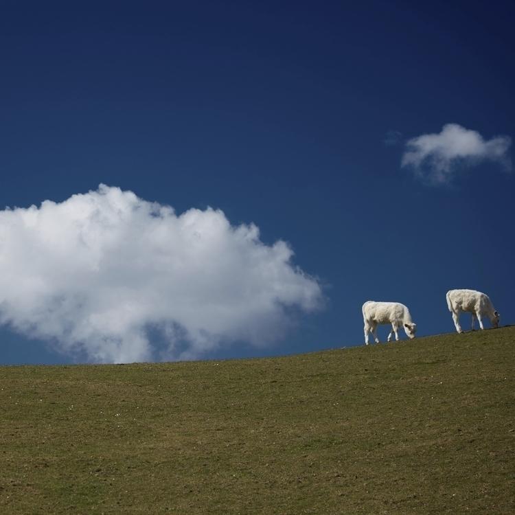 CalfCloud - germany, bavaria, cattle - schlichi | ello