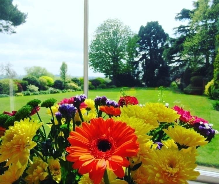 photography, flowers, beauty - primroseprefers | ello