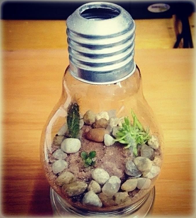 Terrarium lamp bulb - terrarium - massanori   ello