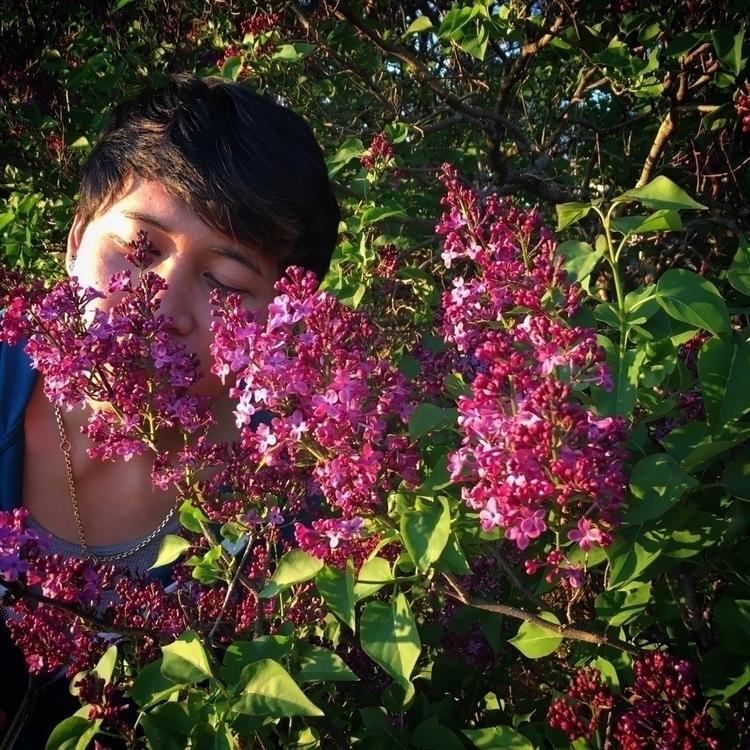 smell, lilac, kewanee, illinois - davekooi | ello