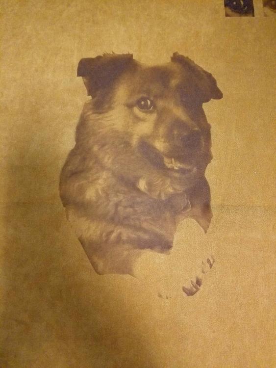 Laser engraved dog suede fabric - resch14 | ello