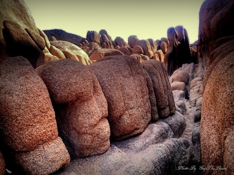 Joshua Tree National Park - guythalizard | ello