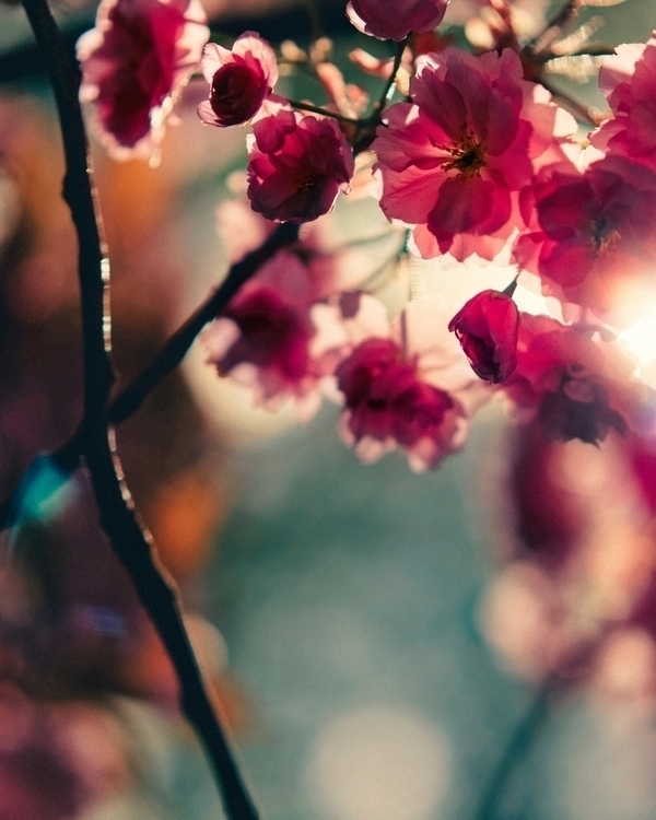 Mandatory Annual Blossom Photo  - klaasphoto | ello