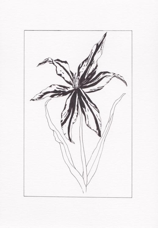 tulip - joelseverne | ello