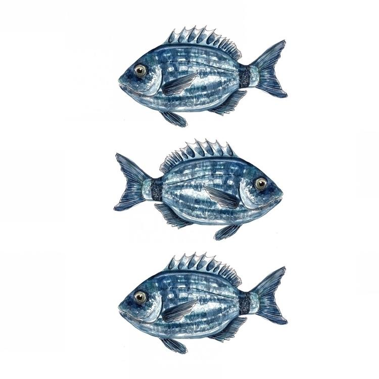 nautical, fish, drawing, painting - aliellydesign | ello