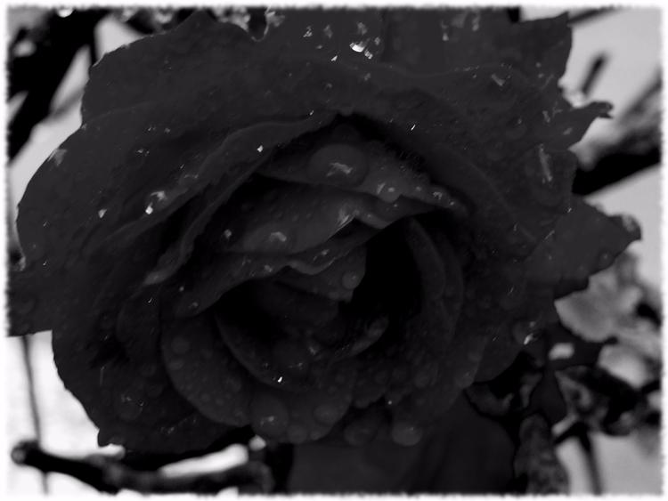 photography, blackandwhite - hsaptus   ello