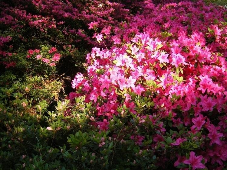 Cicekler, Flowers - willmoller | ello