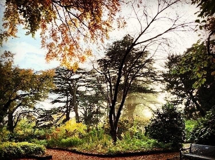 beautiful day - summer, nature, photography - primroseprefers | ello