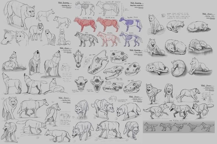 Wolf Study (Animals Visual Libr - rain_walker | ello