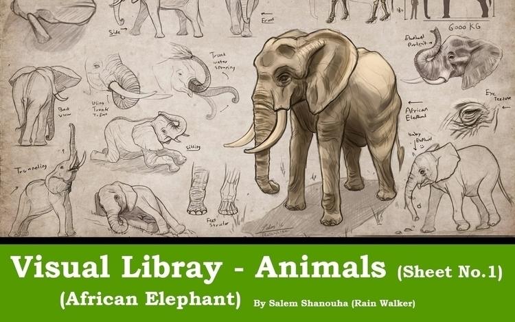 Visual Library Exercise - Afric - rain_walker | ello