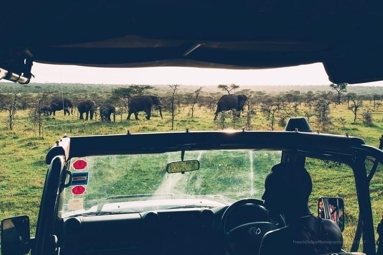 Wild Parade Elephants crossing  - francisdufour | ello