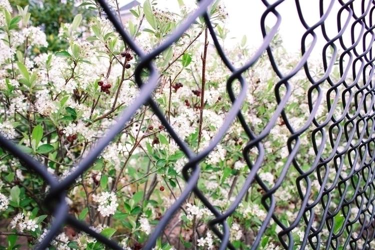 wire - flowers - gpinkney | ello