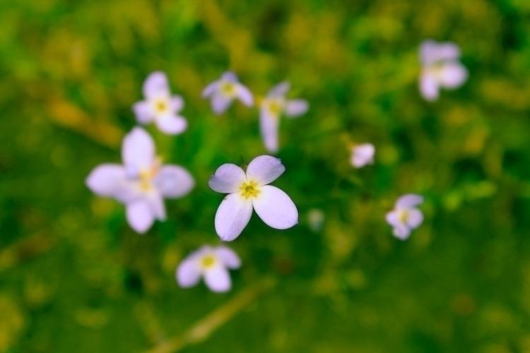 Stand - flowers, plants - gpinkney | ello