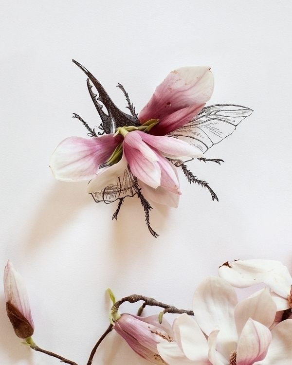 pink magnolia petals black ink  - ronbeckdesigns   ello