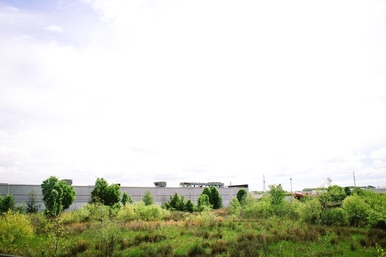 Morning walk - landscape, animals - gpinkney | ello