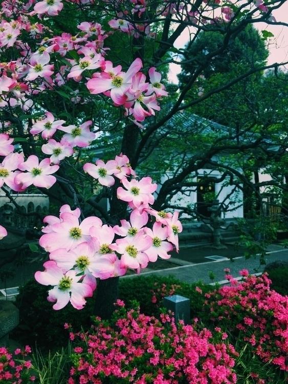 Japanese spring - tenstudio, japan - ten-studio | ello