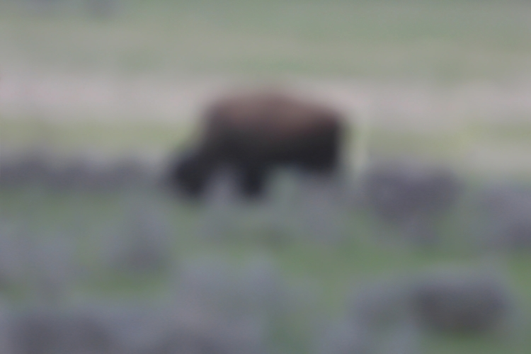 Bison image eating grass remind - chrishuddleston | ello