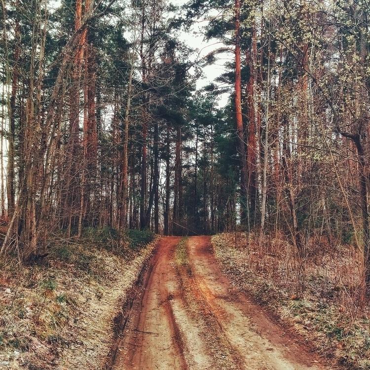 forest, path, road, april, 2017 - beheroght   ello