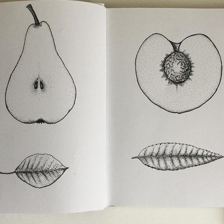 Pyrus / Prunus persica - ink, illustration - spiro_draws | ello