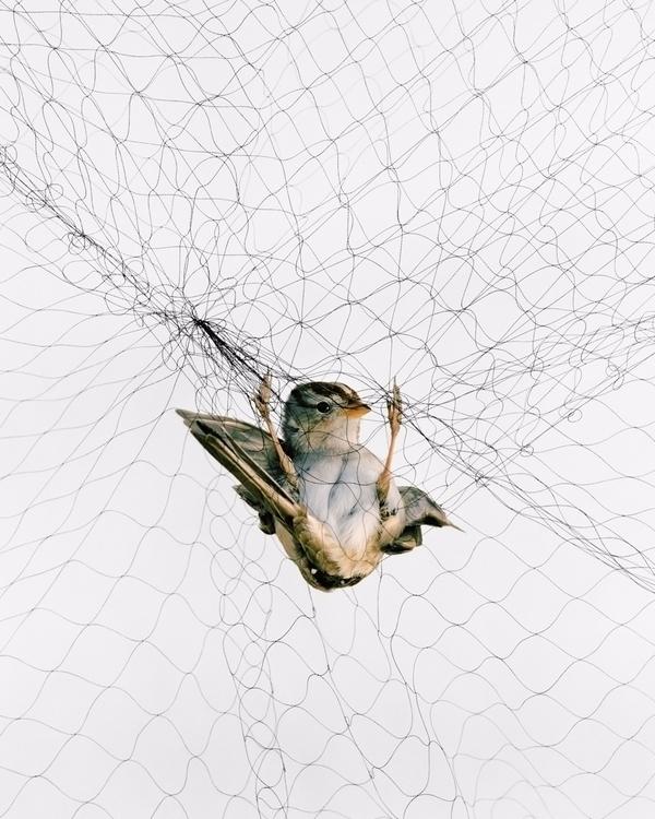 Todd Forsgren: birdwatcher ecol - bintphotobooks   ello
