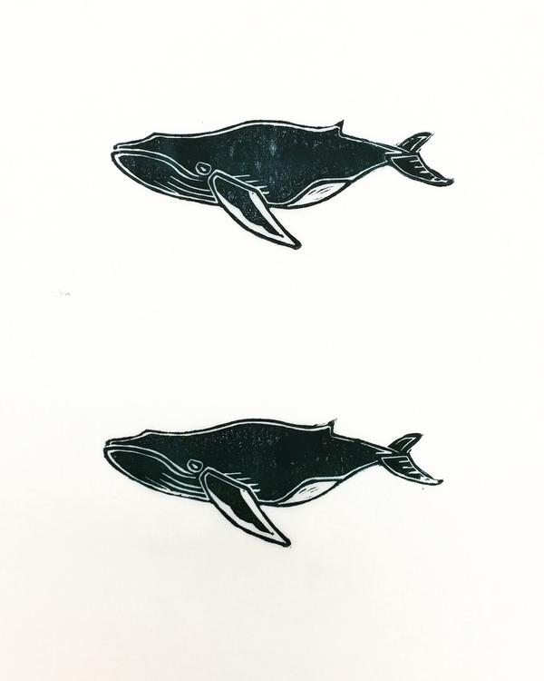 heard sound humpback whales, ne - igimidraws   ello