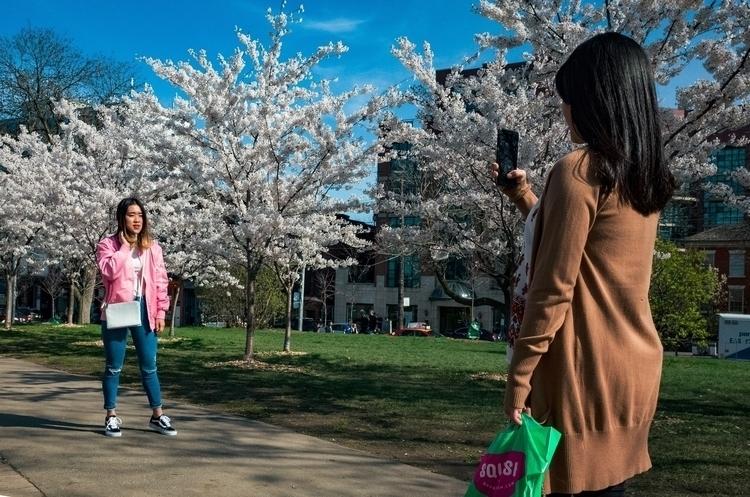 Cherry Blossom Photograph seaso - seanrasmussen   ello