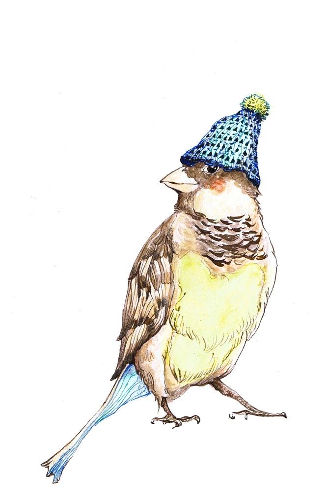 Cheeky bird - birds, cute, nature - ankastan   ello