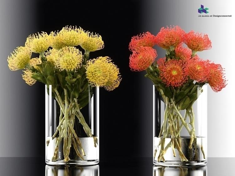 pincushion protea - Pincushion-Protea - adidraw | ello