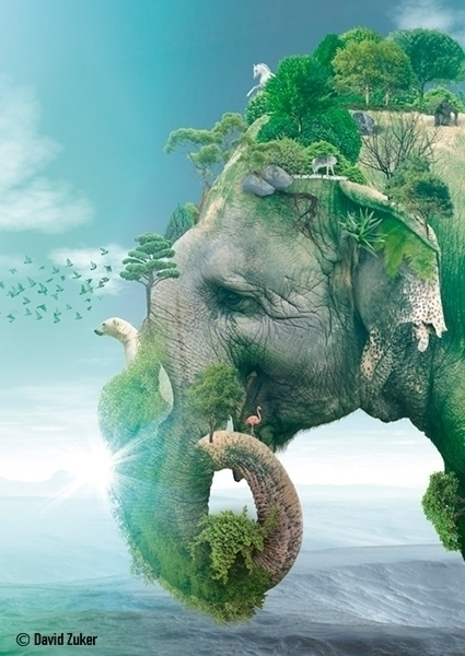 Elephant - photomanipulation, digitalart - davidzuker | ello