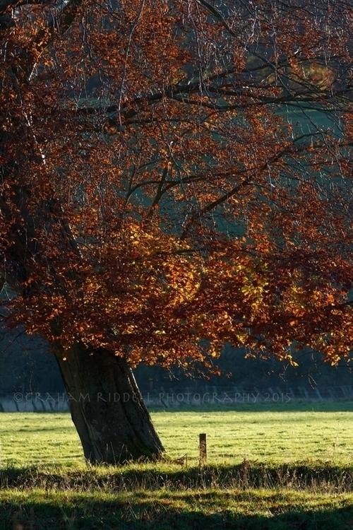 Tree Rust - autumn, seasons, trees - grahamriddell | ello