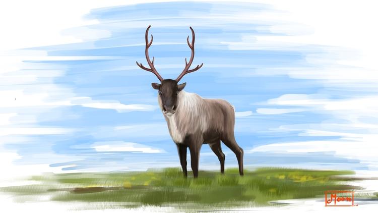 Reindeer - moonarun | ello