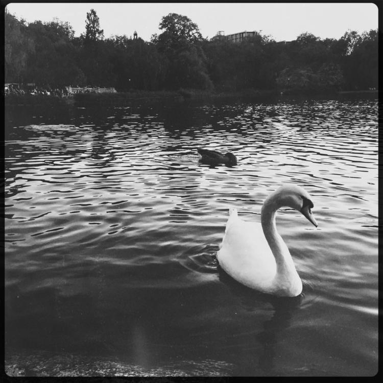 photography, unitedkingdom, london - oliviawc05 | ello