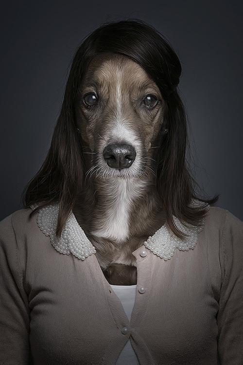 Underdogs - dogs - sebastianmagnani | ello
