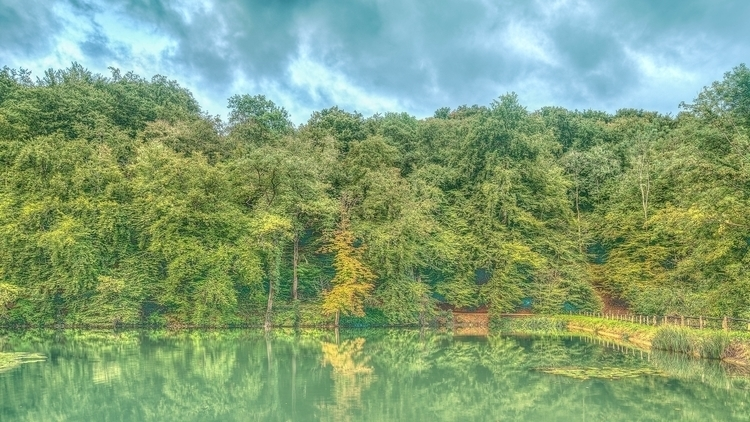 Season - forest, spring, switzerland - lichtundschatten | ello