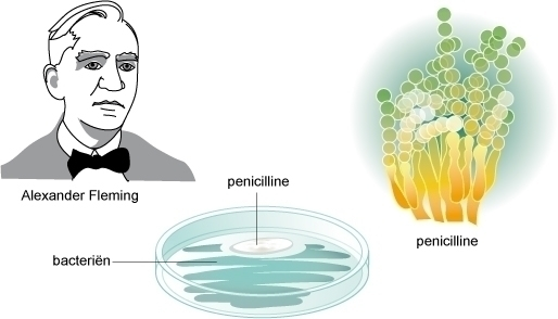 penicillin - biology - gemmastekelenburg | ello