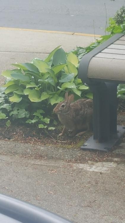 Reluctant Rabbit visits lunch d - littleduffer20 | ello
