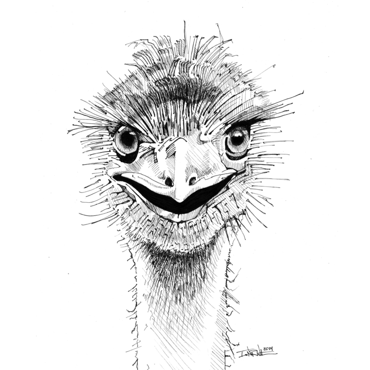 Emu - animation, illustration, drawing - ianwithers | ello