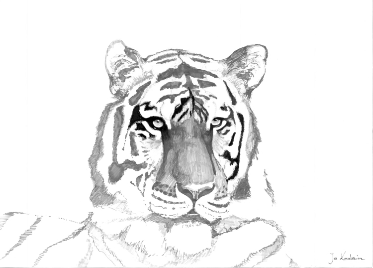 Tiger Tria Markers, B2 - tiger, face - jandraws | ello
