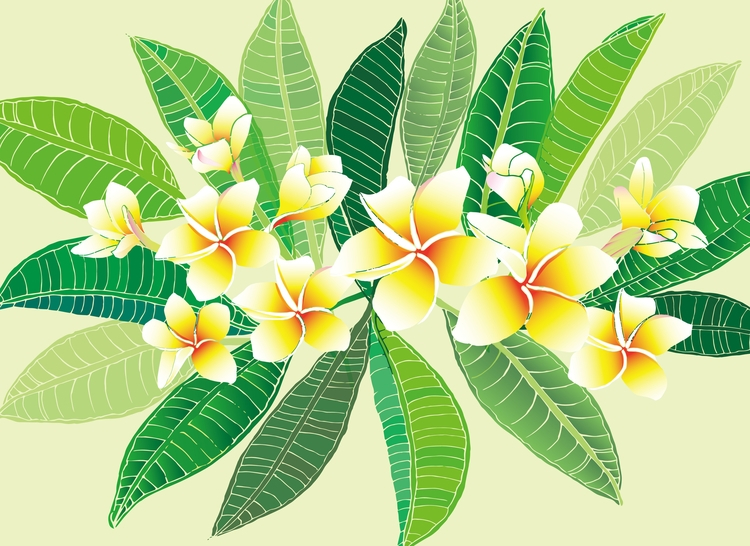 Plumeria obtusa - illustration#digitalart#design#characterdesign#photoshop#painting#davisvrworks#drawing#conceptart - moonlighttwosu | ello