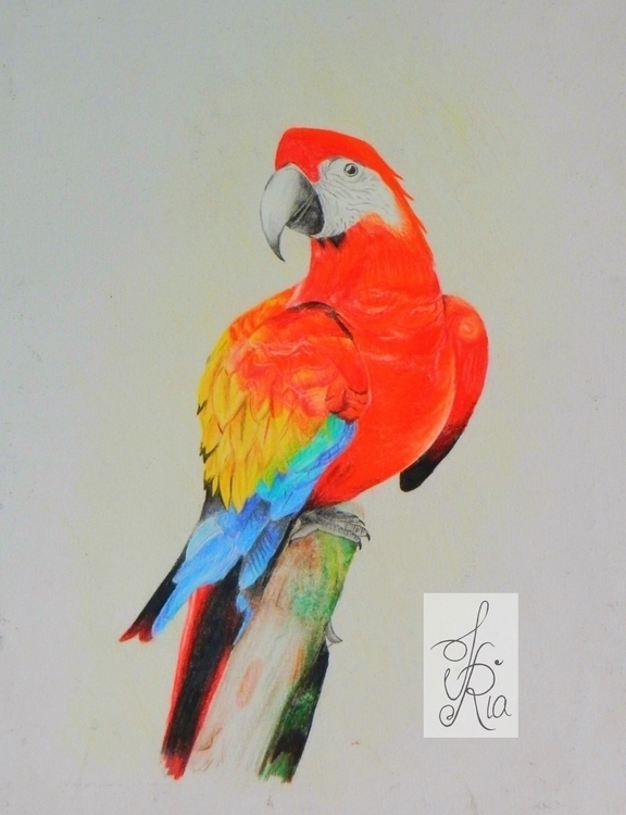 Bird II - drawing, pencildrawing - fariafiroz26 | ello