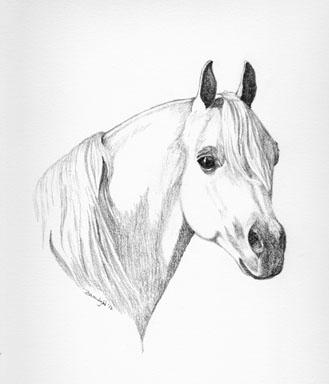 Arabian 2 - drawing - brandyhouse | ello