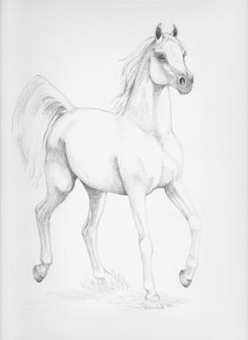 Arabian 3 - drawing - brandyhouse | ello