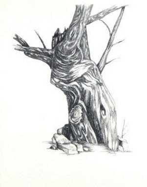 Tree - drawing - brandyhouse | ello